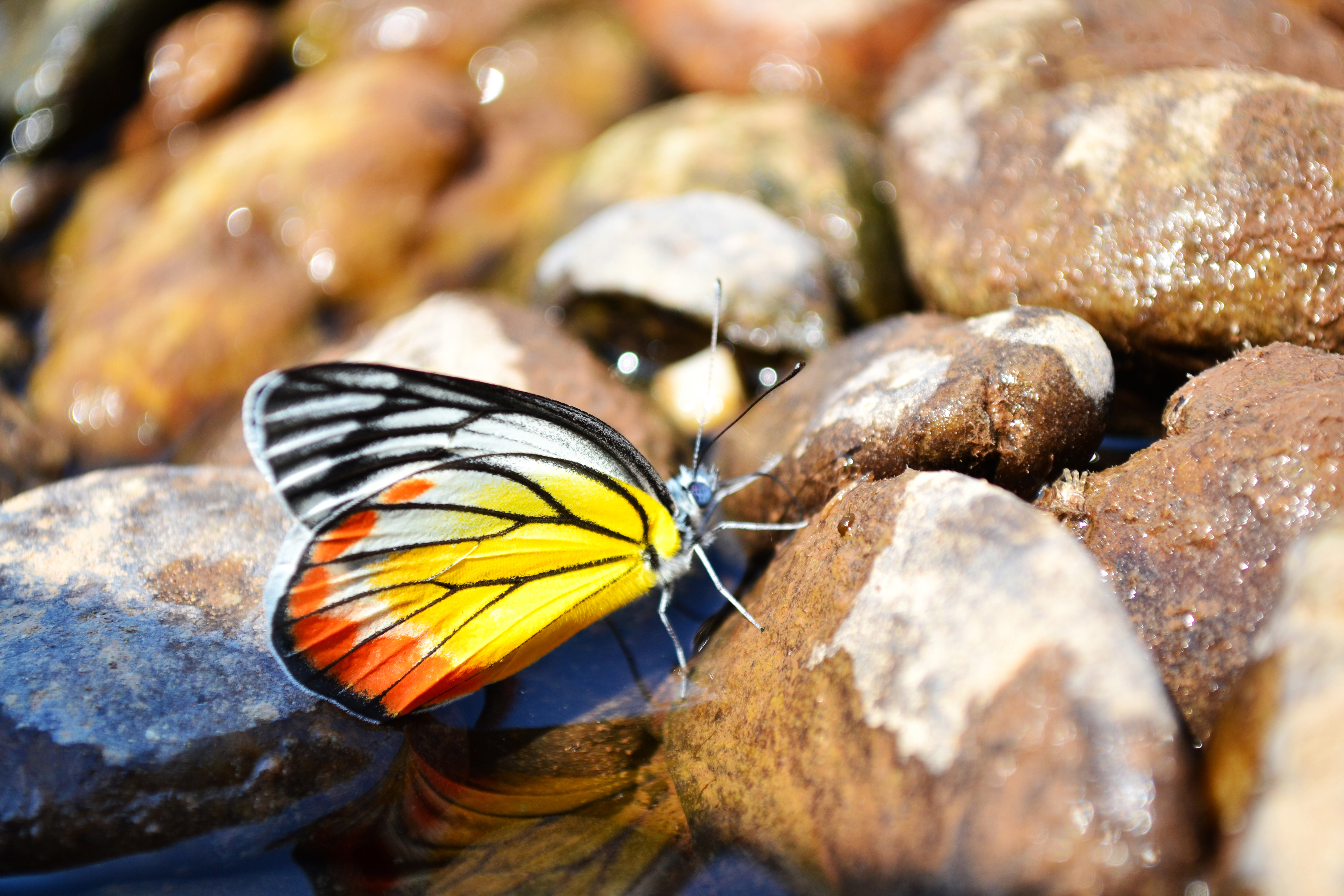 butterfly at the river